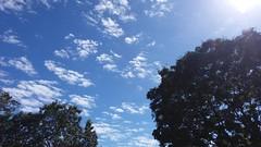 terça-feira, 18/07/17 ☁ Vitória, Espírito Santo (ohmystunning) Tags: céufienanuvem clouds nuvens cloud nuvem céu sky nublado cloudy photography fotografia vitória espírito santo es july utopiananuvem paysage scenery nature tree streets city summer natureza blue white