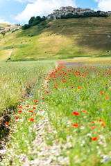 La Fioritura (The Flowering) (MikePScott) Tags: buttercups camera castelluccio clouds clover featureslandmarks flowers hills italia italy lens mountains nikon2470mmf28 nikond800 norcia plain plants poppies sky topography trees umbria