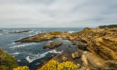 Punta de Los Lobos Marinos 2 (dennisjohnston17) Tags: pointlobos waves cliffs wildflowers pacific carmel california