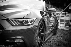 Mustang Gt 2017 Tuning (AntoineTardif1) Tags: mustang gt 2017 tuning blackandwhite black white noir blanc noiretblanc voiture ford