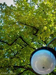 Under the Shade (Khalid H Abbasi) Tags: sonydscrx100m3 shade tree streetlight green perspective plovdiv bulgaria gardenoftsarsimeon