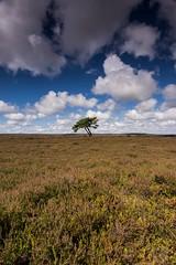 Lone tree at Egton, North York moors (peterkreczak) Tags: nikon tokina egton moors yorkshire northyorkmoors lonetree