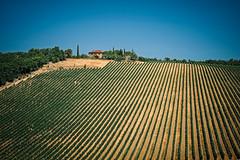 tuscany vineyard (freiraum7) Tags: fuji xt1 i fujinon xf 18135mm