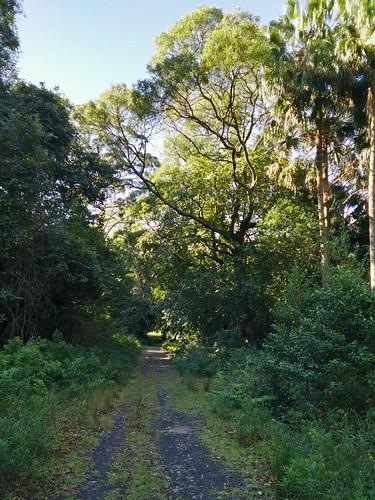 Mount Kembla Ring Trail
