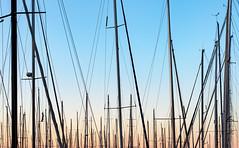 Mast Er Piece (jaxxon) Tags: 2017 d610 nikond610 jaxxon jacksoncarson nikon nikkor lens nikon50mmf28g nikkor50mmf28g 50mmf28 50mm niftyfiftyprime fixed pro abstract abstraction masts mast sailing sail sailboats boat boats boating port marina bay marine maritime sky sunset evening