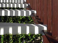 summer shadows (maximorgana) Tags: ivy rambling rose viga wood lamanga elzoco shadow stripes theartoflight green white brown
