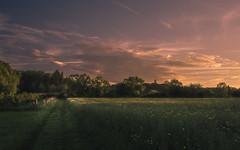 Evening is approaching (Netsrak) Tags: field rape evening color tree trees baum bäume feld raps eifel europe europa