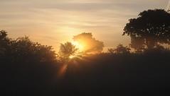 Sonnenaufgang über den Rinderweiden; Bergenhusen, Stapelholm (82) (Chironius) Tags: stapelholm bergenhusen schleswigholstein deutschland germany allemagne alemania germania германия niemcy morgendämmerung sonnenaufgang morgengrauen утро morgen morning dawn sunrise matin aube mattina alba ochtend dageraad zonsopgang рассвет восходсолнца amanecer morgens dämmerung gegenlicht nebel fog brouillard niebla baum bäume tree trees arbre дерево árbol arbres деревья árboles albero árvore ağaç boom träd