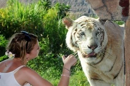 バリ・サファリ&マリンパーク レオパード(海外の動物に出会えるオプショナルツアー)