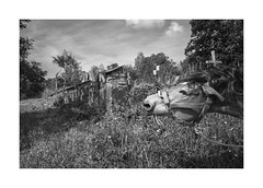 At the cemetery (Jan Dobrovsky) Tags: 28mm leicaq monochrome blackandwhite ralsko outdoor horse cemetery document landscape village countryside countrylife rural mod