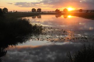 Morgens an der Alten Treeneschleife; Süderhöft, Nordfriesland (87)
