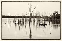 Picture in black and white (aldadelorenzo2011) Tags: black white resovior stark trees boat