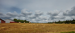 The crop from the winter seed has been harvested (Niels J. Buus Madsen) Tags: