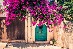 Blooming Doors (A & A McKee) Tags: crete greece rethymno street door flower bloom summer sunny warm colours city town nikon d500 sigma 1835 18 flowers rethymnon dslr
