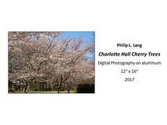 "Charlotte Hall Cherry Trees • <a style=""font-size:0.8em;"" href=""https://www.flickr.com/photos/124378531@N04/35966108246/"" target=""_blank"">View on Flickr</a>"