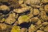River Fish (Armin Šaković) Tags: fish vrbas river bosnia banja luka stones cold mossy green nature water