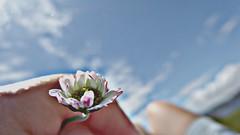 (Sa Shula de Tarifa) Tags: flor flower dedos fingers cielo sky fela ella she her relax gijón andalucía españa spain