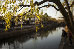 Sunny leaves (MarieWillPhotographie) Tags: kurashiki 倉敷市 okayama 岡山県 leaf sun sunset river canaux japan discovery trip travel holiday honeymoon sunlight canon 5d mark ii 1740mm