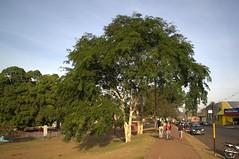 Jataí, Goiás, Brasil (Proflázaro) Tags: brasil goiás jataí parqueecológicodiacuy cerrado árvore natureza ecologia cidade parque