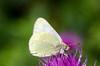 _D7K9509 (lions_italy) Tags: emilius escursioni gsv pila