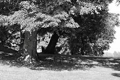 Tuomarinkylä (m.pertti) Tags: landscape park tree summer blackandwhite monochrome tuomarinkylä helsinki finland