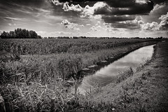 Trouble Over The Corn (Alfred Grupstra) Tags: nature ruralscene outdoors field landscape agriculture summer blackandwhite farm meadow sky grass scenics river nonurbanscene nopeople tree cloudsky plant season corn ditch reflection