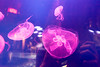 Jellyfishes (tesKing (Italy)) Tags: abudhabi dubai dubaimall emiratiarabi emiratiarabiuniti