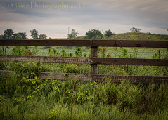 Reluctant Life (HFF) (13skies) Tags: hff fences country countryroad woodenfence countryside fields foliage cloudysky green 13skies morning earlymorning wake drive cleaverrd brantcounty sonya99 poem happyfencefriday fencefriday