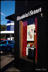 CRW_8387 (mattwardpix) Tags: blackbird corner queenstreet cookshill newcastle nsw australia matthewward