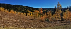 Autumn Colors (The VIKINGS are Coming!) Tags: trees mountains foliage colors autumn alpine wilderness deer elk bear trail bare trek blueskies hike hills outdoors spruce pine fir aspen