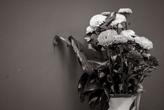 Foto- Arô Ribeiro -001 (Arô Ribeiro) Tags: pb photography laphotographie blackwhitephotos flores flowers arte brazil arôribeiro