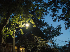 20170725 streetlight (chromewaves) Tags: olympus omd em10 mark ii m43 micro four thirds mzuiko 25mm f18 toronto