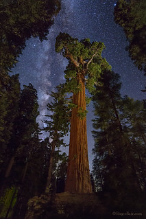 Milky Way and Giant Sequoia