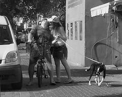 It's A Dog's Life (canonsnapper) Tags: candid dog walking olympus omd em5 israel olympusolympus e5 street photography telaviv