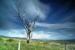 deadwood, staged! (SkyeBaggie) Tags: tree dead deadtree heaste isleofskyescotland skye scotland hebrides highlands