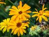 210/365 - Lange Antennen (J.Weyerhäuser) Tags: mainz brunnen fühler gelb bug käfer falter insekt