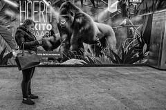 (Peter M. Meijer) Tags: rotterdam holland strada street strasse callejera straat candid urban people man woman gorilla ricohgr bw monochrome bokito