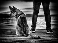 Anticipation (Stuart D Robertson) Tags: dog jetty monochrome blackandwhite lochlomond thecruin
