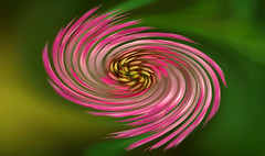 july12 2017 24 (Delena Jane) Tags: delenajane swirl closeup clover flower macro pentaxart abstract newfoundland ngc canada