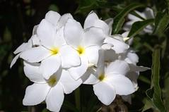 Jataí, Goiás, Brasil (Proflázaro) Tags: brasil goiás jataí jardim flor natureza ecologia cidade planta canteiro