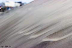 IMG_0388 (Azezjne (Az photos)) Tags: canon 75300 50 stm 600d berck sur mer bercksurmer cote côte dopale bromance plage sable bokeh zoom coucher soleil sunset beach sand eclipse dune mouette animaux animalière flou 75 300