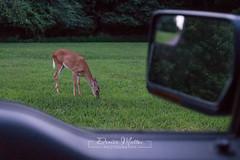 193/365 : Oh deer