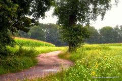 Feldweg (grafenhans) Tags: sony alpha alpha700 a700 tamron 2590 weg blumen bäume regen sommer spaziergang wiese feld feldweg grafenwald bottrop sandwüste