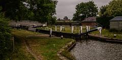 A damp evening by the canal (Peter Leigh50) Tags: grand union canal lock gate bridge trees farm train ews db cargo class 66 leicestershire rural