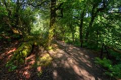 Scottish Pathway (Nola Nate) Tags: scotland highlands isleofskye woods forest path pathway trail trees nature ibeauty landscape uk europe shadows