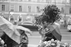 Nevsky prospect. Rain\ Невский пр. Дождь (#maksimkr) Tags: stpetersburg street d76 film typed helios103 kiev2