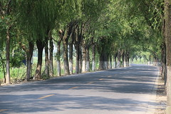 Mad Dogs and Englishmen .... and deserted streets 1/8 (johey24) Tags: china shanghai shanghaicountryside ruralshanghai green rivers deltas