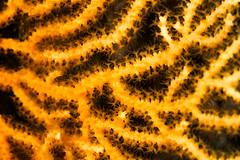 Gorgones jaunes (YackNonch) Tags: mugel nauticamna7d plongéesousmarine nauticam ssysd1 scubadiving ss canon scuba plongéedubord gorgonesjaunes plongeur provence plongée eos diving calanque na7d calanquedumugel macro france canoneos7d laciotat dive lieu 7d diver