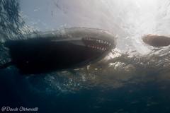 IMG_6096 (davide.clementelli) Tags: scuba underwater underwaterlife diving dive immersione portofino colori colors colore color fishes fish pesci