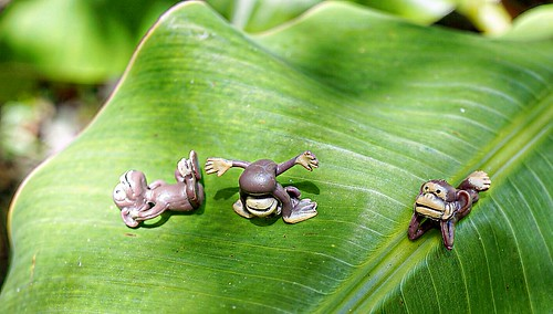 3 tiny monkeys play on a banana leaf
